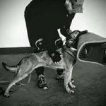 Szkolenie psów użytkowych
