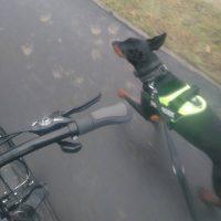 bieganie psa przy rowerze
