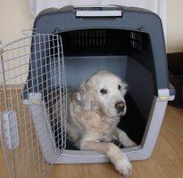 pies w transporterze