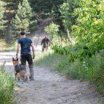 trening psa służbowego