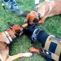 zapoznawanie psów ze sobą